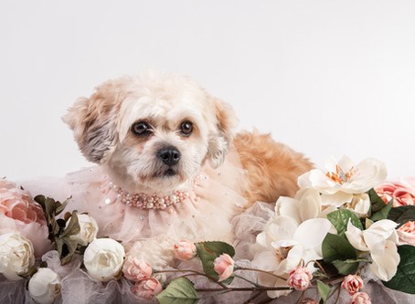 Pet Photography in Maine | Why to Hire a Photographer who Specializes in Pet Photography!