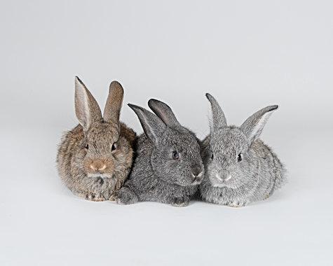 Bunny portrait in Maine