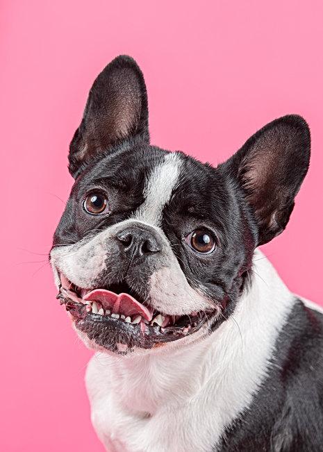 New England dog photographer