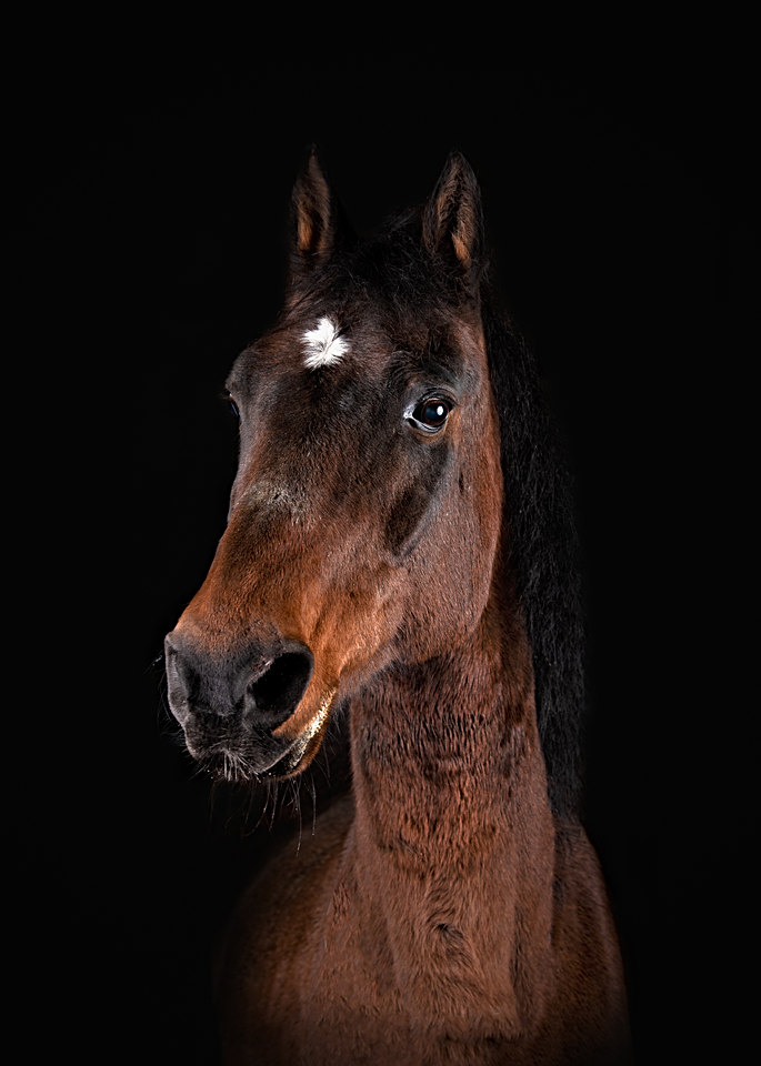 Maine horse photography
