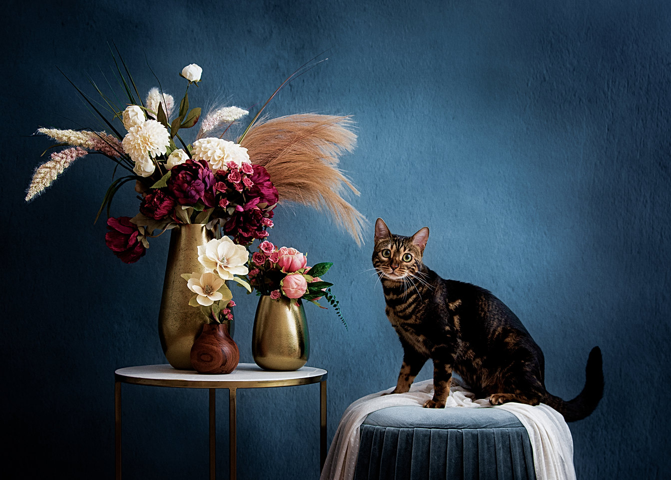 cat photography studio in new england
