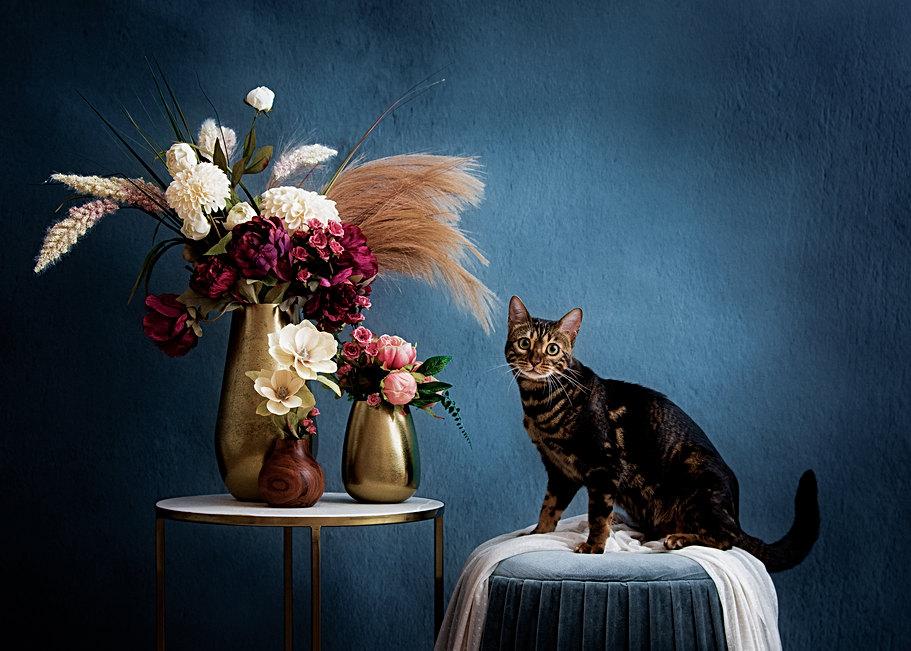 cat photography studio in new england