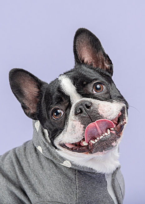 Maine's dog photography studio