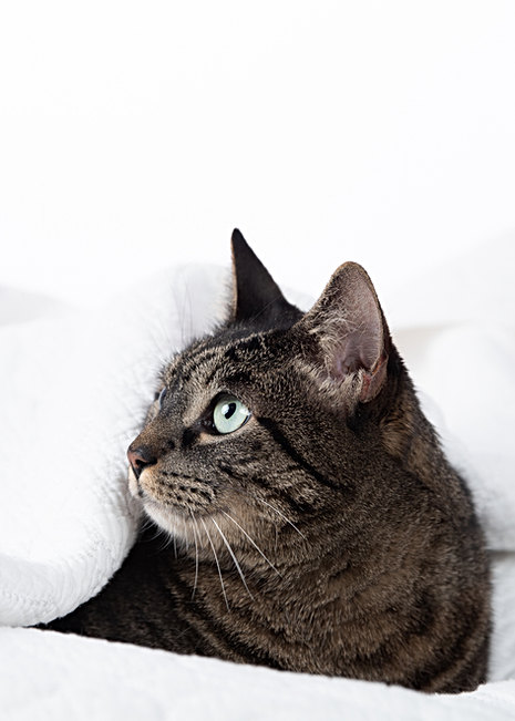 Maine pet photographer