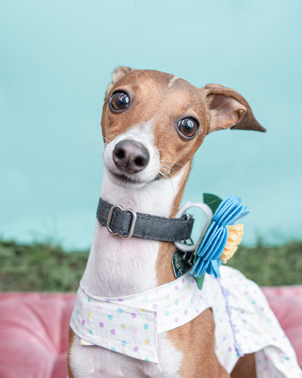 Dog photography in Falmouth, Maine