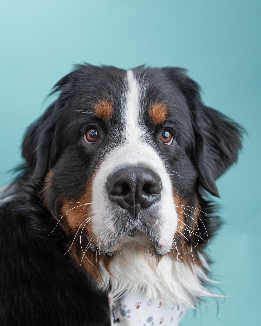 Professional pet photographer in Maine