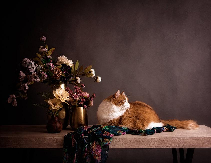 cat photographer in boston