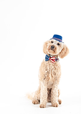 portland dog photographer