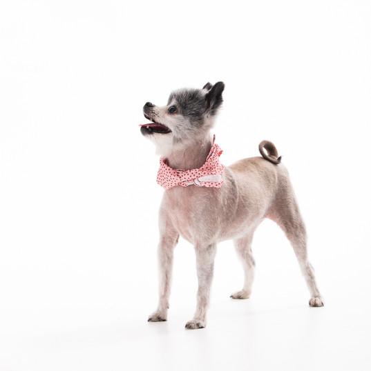 Maine_Dog_Pet_Photographer-8.jpg