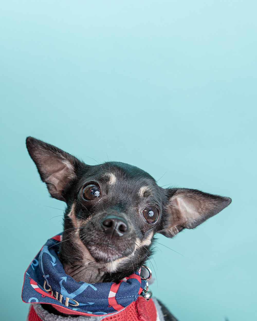 Pet photographer in Southern Maine