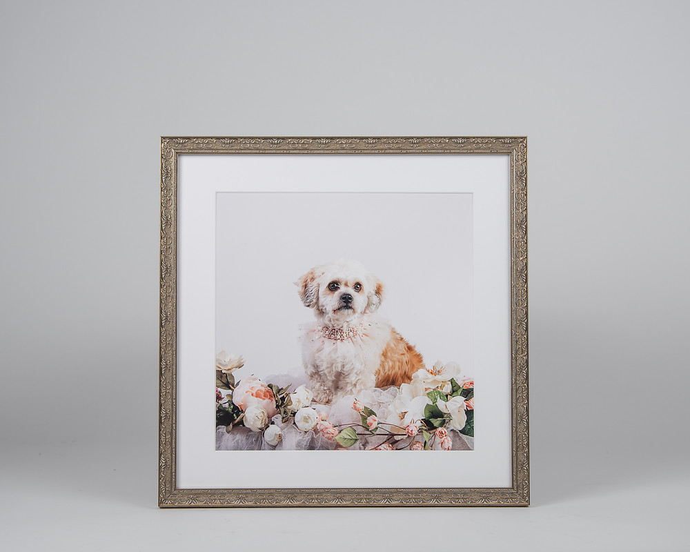 Pet photography in Maine