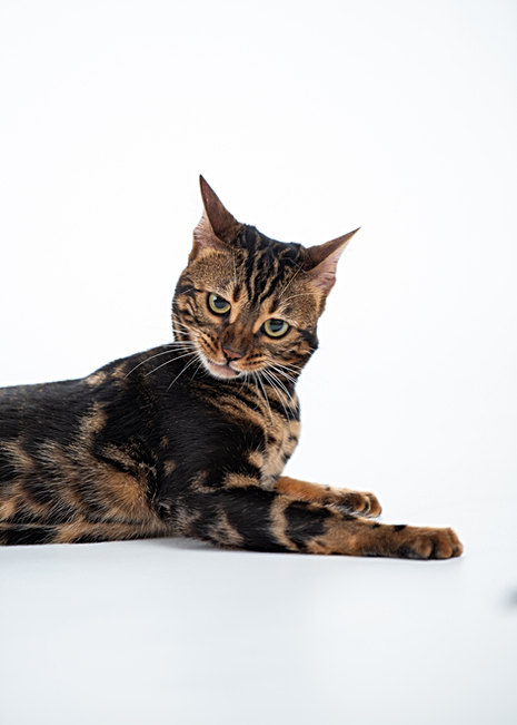 cat photos from maine photographer