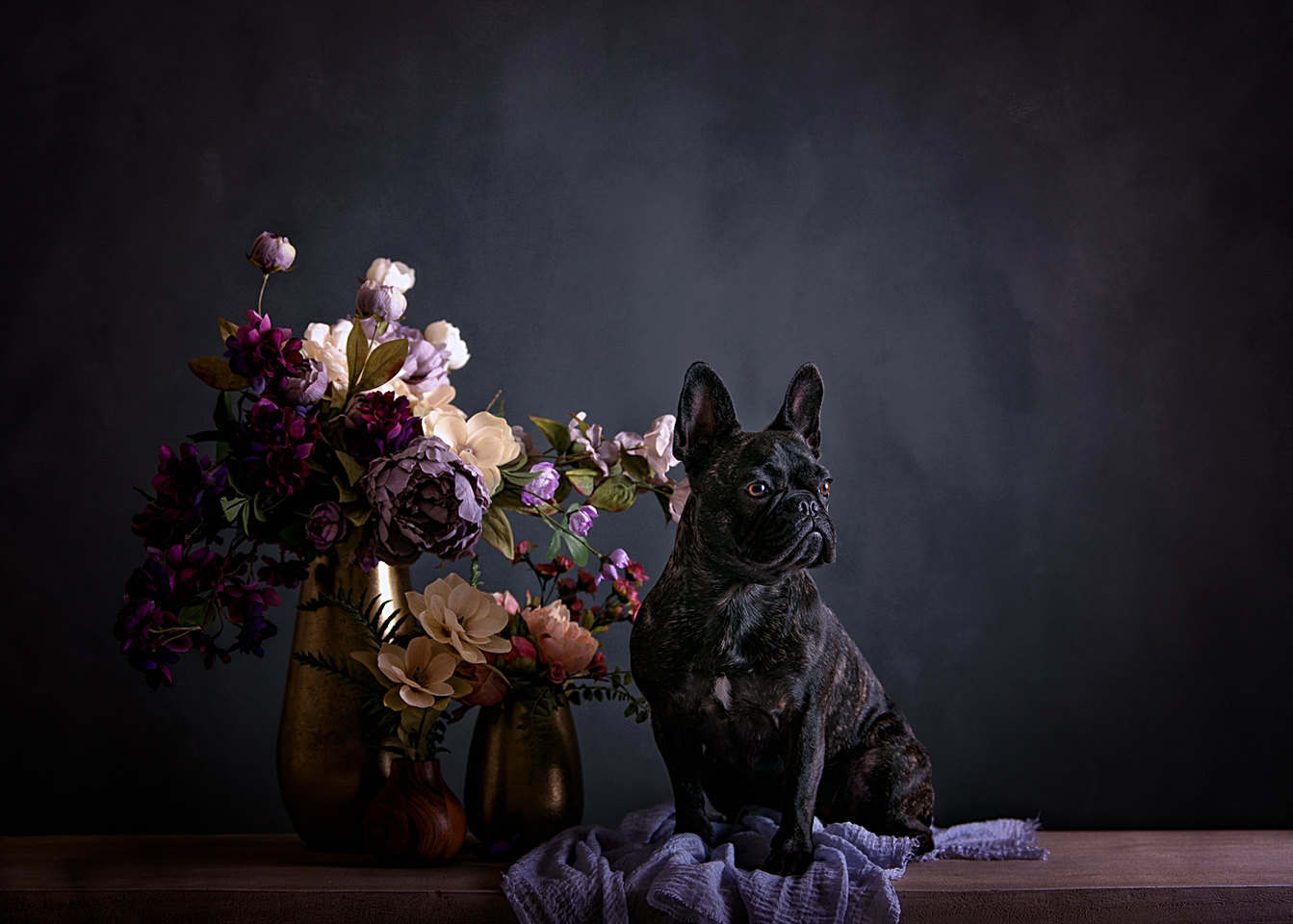 fine art dog portraits
