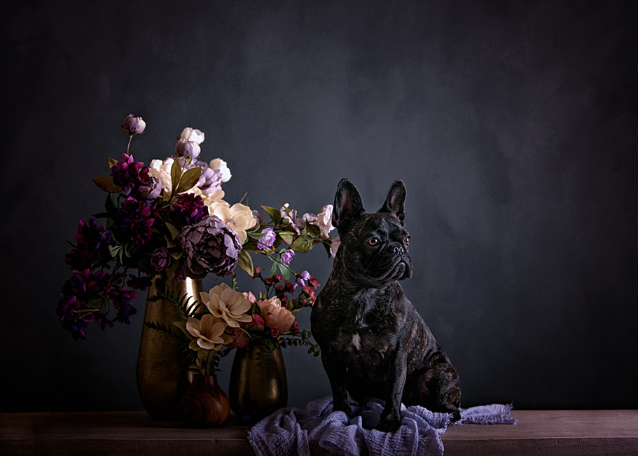 fine art dog portraits
