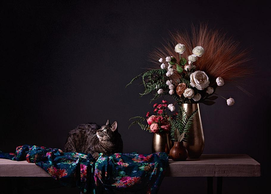 Cat photography studio in Maine