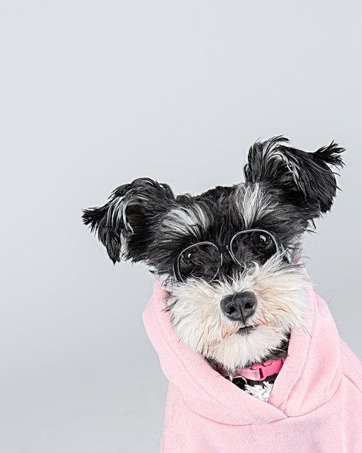 Biddeford dog photogapher