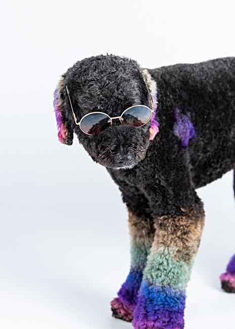 Pet photographer in Maine