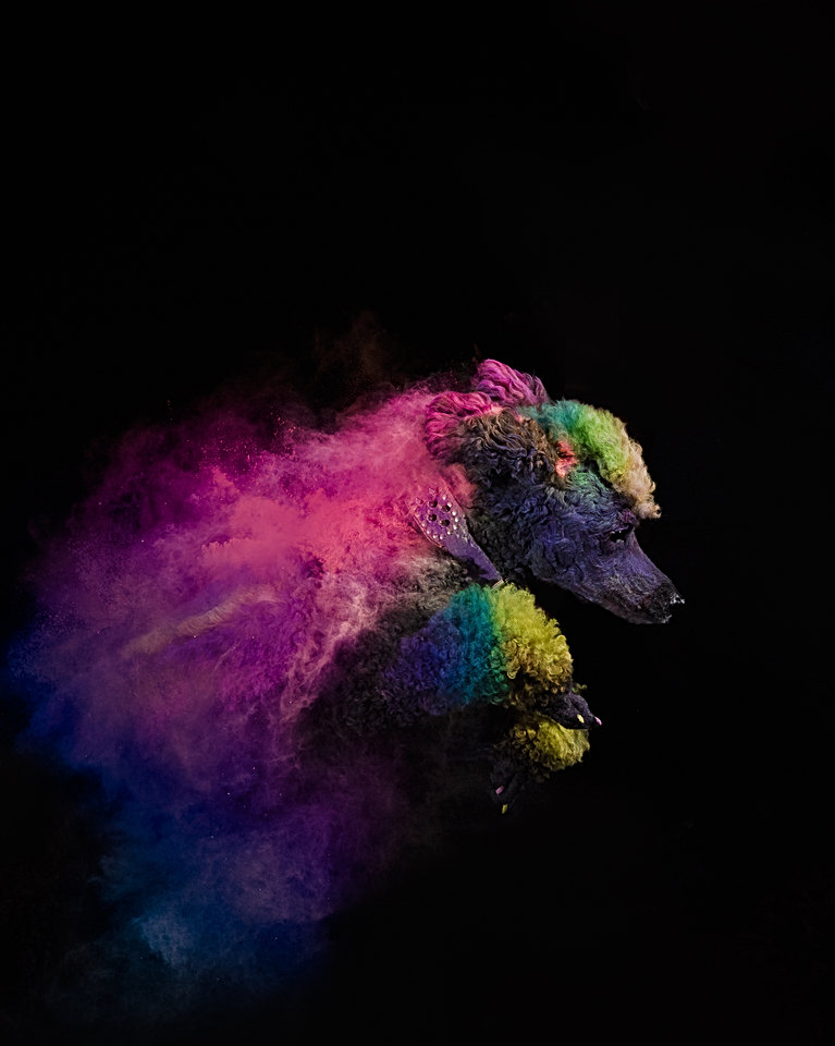colored powder photography for dogs