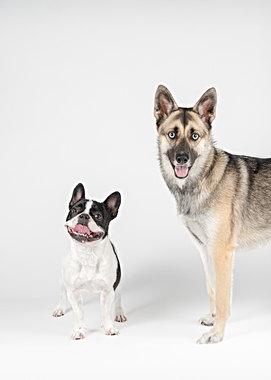 Dog photography studio in Boston, MA