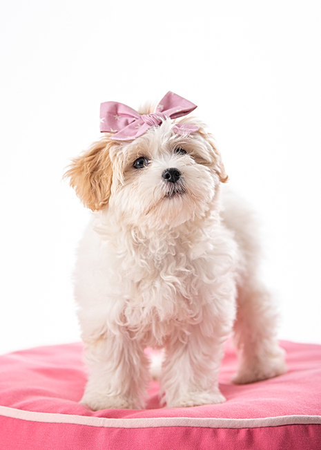 puppy photographer in Maine