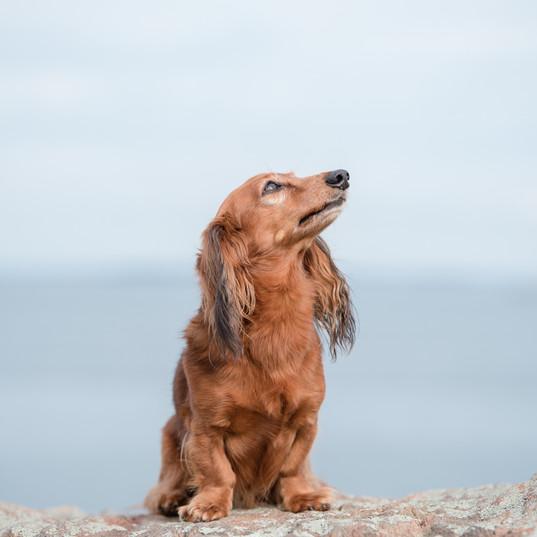 Portland Dog Photographer-7.jpg