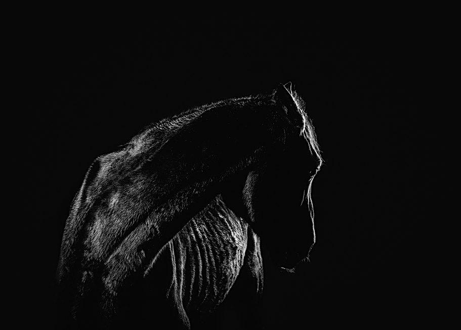 Equine portraiture in Maine
