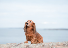 Portland Dog Photographer-8.jpg