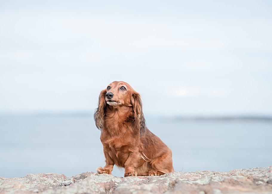Outdoor pet pictures in Maine
