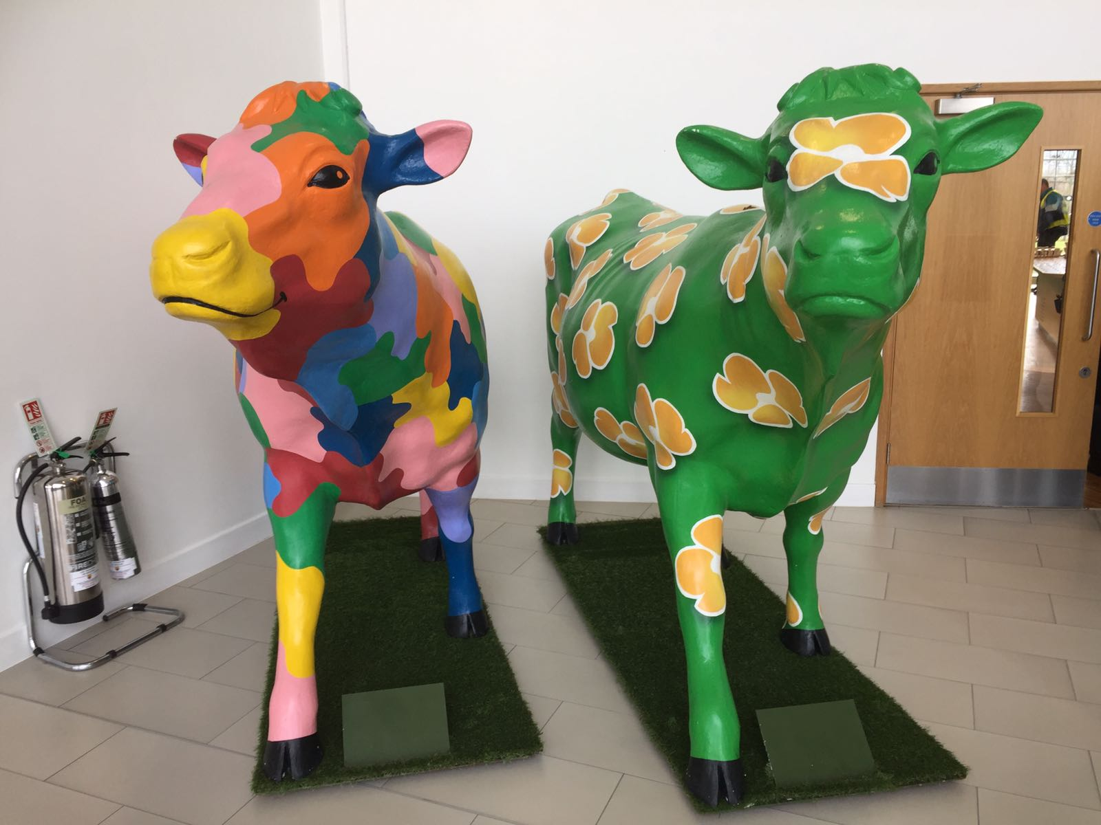 Arla Cows