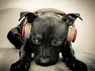 Dogs Have Music Preferences: Reggae and Rock