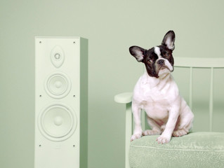 Adoptify: Spotify supports pet adoption matching music tastes of dogs and owners