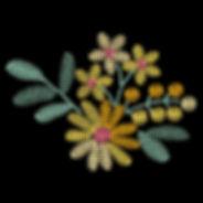 daisies-3-image.jpg