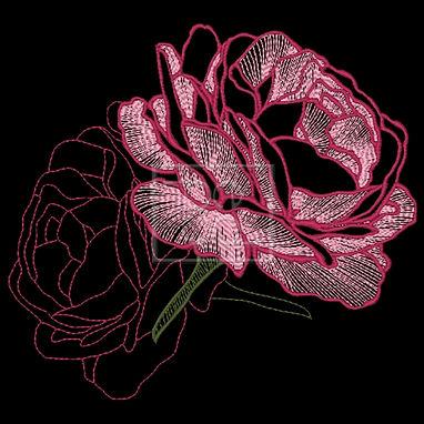 Rose-Bloom-1-Image.jpg