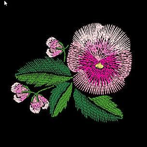 pansies-3-image.jpg