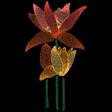 Art Nouveau Flower - Tulips
