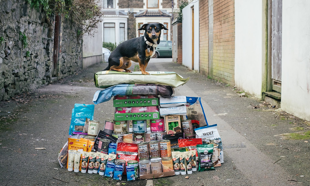Do you trust the government to look after your dog?