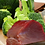 Thumbnail: Tuna with Salmon and Broccoli blended with Sweet Potato