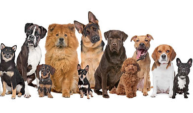 Different breeds at different life stages require a healthy nutricious variety of dog dinners
