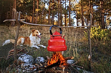Dog by a campfire enjoying a comfrtable life filled with energy and vitality