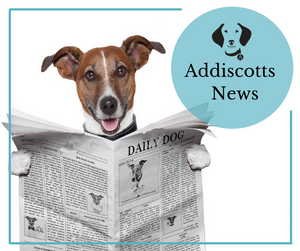 I need more doggy news, let me sign up!
