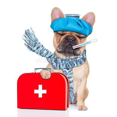 Dogs on a grain free diet have fewer allergies. Dog with a medical bag