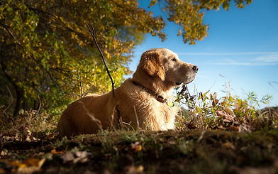 What does grain free mean. Healthy dog sat enjoying the countryside