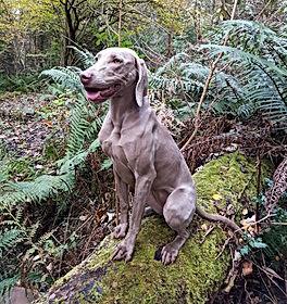 Kona on tree log.jpg