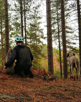 Weims in the forest. Healthy grain free dog nutrition.