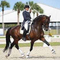 Dressage Stallion (2).jpg