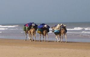 Océan trek au Maroc avec Amouddou trekking