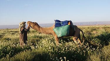 Désert douceur des palmiers splendeur des dunes trek au Maroc avec Amouddou trekking