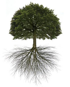Peripheral nerves have he ability to regeneate like the leaves of a tree - Neuropathy Delray Beach