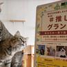 #推し猫グランプリ 猫カフェ部門エントリー中!【投票期間4/10~5/9】