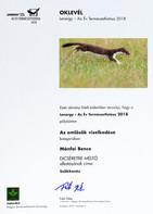 oklevel_web.jpg
